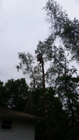 Tree removal or trimming/thinning