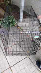 Large Pet Lodge Dog Crate - 2 Doors and Divider