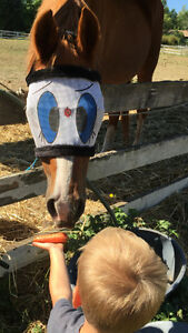 Emergency Equine (Horse) First Aid Training
