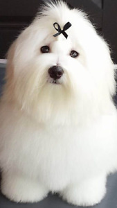 DOG GROOMING-Experienced/CrateFree/GreatPrice/SOUTH ETOBICOKE