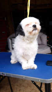 Scruffy To Fluffy Dog Grooming Services!