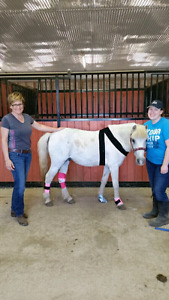 Equine First Aid Course.