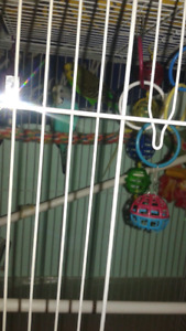 Cage and birds