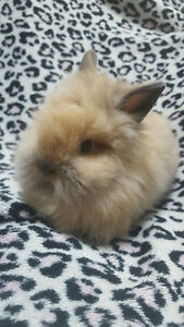 Looking for a Sweet & Soft Bunny to Add to Your Family?