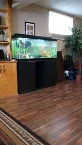 55 gallon fish tank $460 or best offer