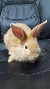 Friendly Tame Baby New Zealand Rabbits - 1 Boy & 3 Girls