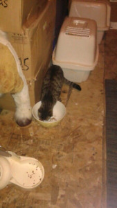 2 Cats One Is A Male & The Other To Are Female
