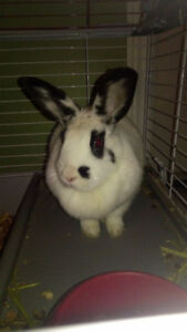 Bunny for Sale with Cage