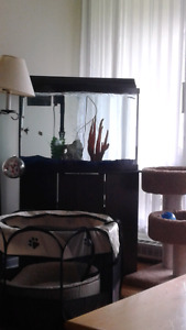 Fish tank and stand plus all accessories