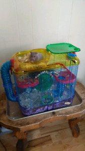 Hamster avec cage 50$