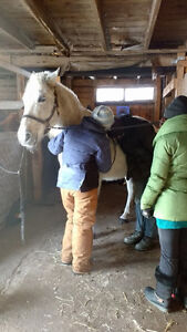Equine First Aid Courses- Starting to book now for fall season