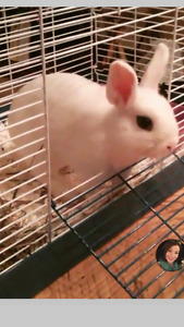 Year old bunny and 3 level cage!