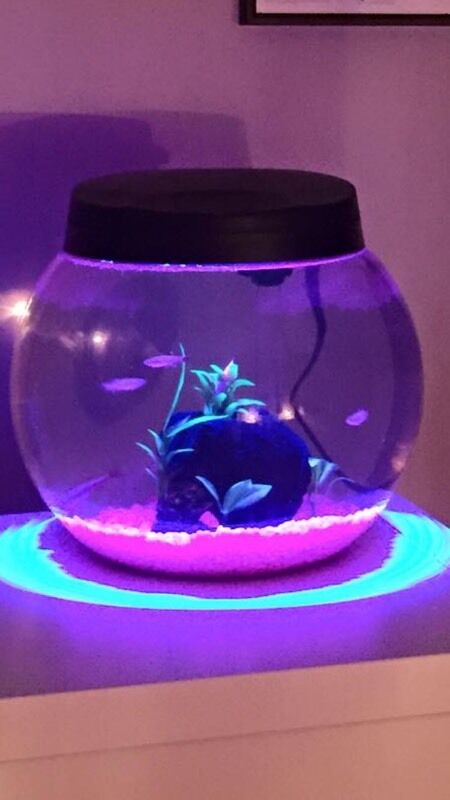 Aqua One  Round Light Up Fish Tank
