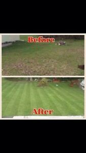 New home owner in Lindsay? Brown Sod?  Kawartha Lakes Peterborough Area image 3