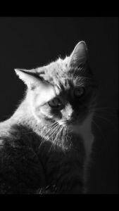 Looking for a loving home for senior cat