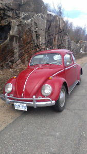 1964 classic Beetle Turnkey get in and drive