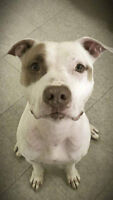 Chase looking for a forever home with no other pets