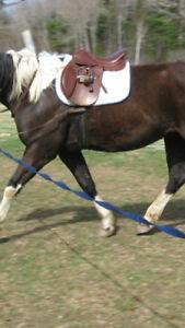 17.5 in jumper saddle