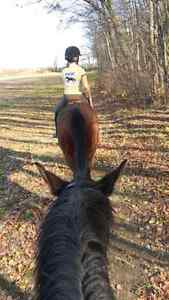 Horse Boarding in Ancaster