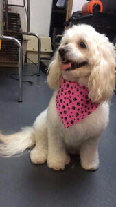 Dog and Cat Grooming Services Windsor Region Ontario image 3