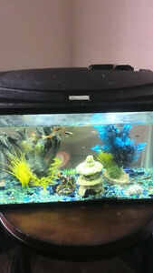 Fish tank with Guppys for sale