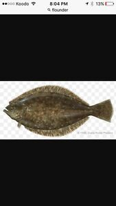 Flounder nets for sale