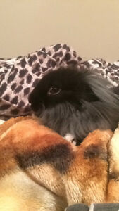 Rabbit looking for a home