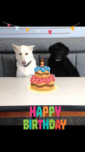 Dog Birthday Parties @ Little Paws Inn Doggy Daycare