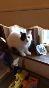 URGENT: female cat free to good home Peterborough Peterborough Area image 2