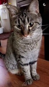 FRIENDLY CAT LOOKING FOR A HOME