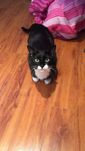Looking to Rehome my Cat