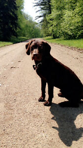 PUPPY SITTER NEEDED MADGE LAKE