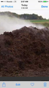 Organic composted cow manure