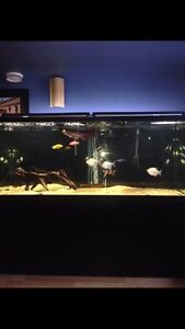 220 gallon fish tank on stand with accessories
