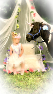 Miniature Pony Photobooth