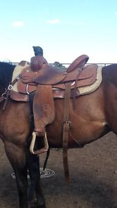 Team Roping Kijiji Free Classifieds In Alberta Find A