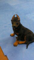 Puppy Classes Start Wed. Feb 10