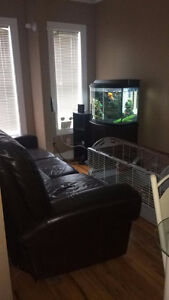 1 Bedroom available in Upstairs 4 Bedroom House - 5min walk MUN St. John's Newfoundland image 1