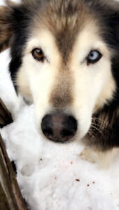 LOST DOG: Please help!