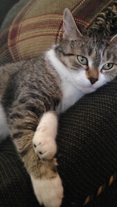 Sweet female cat looking for a good home
