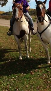 Two beautiful horses for sale