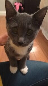 Four month old kitten for free