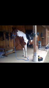 Horse Board Duncan -Self Board