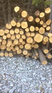Cedar Posts in Clavering