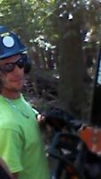 Certified arborist for hire