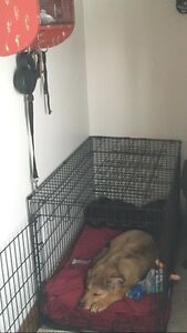 "36"" dog kennel"
