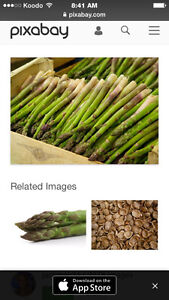 Wanted : Asparagus plants/ roots