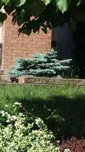 Talus: blocs de ciment pour murets et bordures