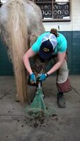 Farrier taking on new Clients