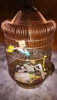 Two budgie for sale